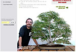 David Benavente. Estudio de bonsai